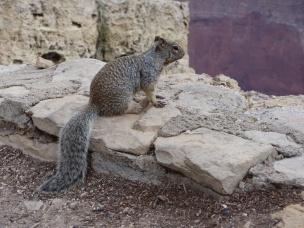 Ecureuil en méditation